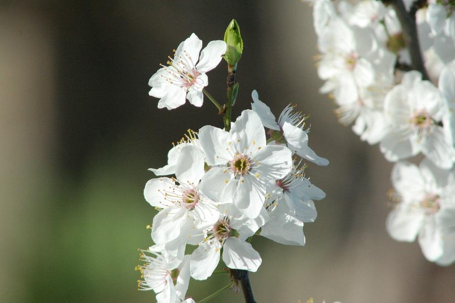 Пролет в Тънково