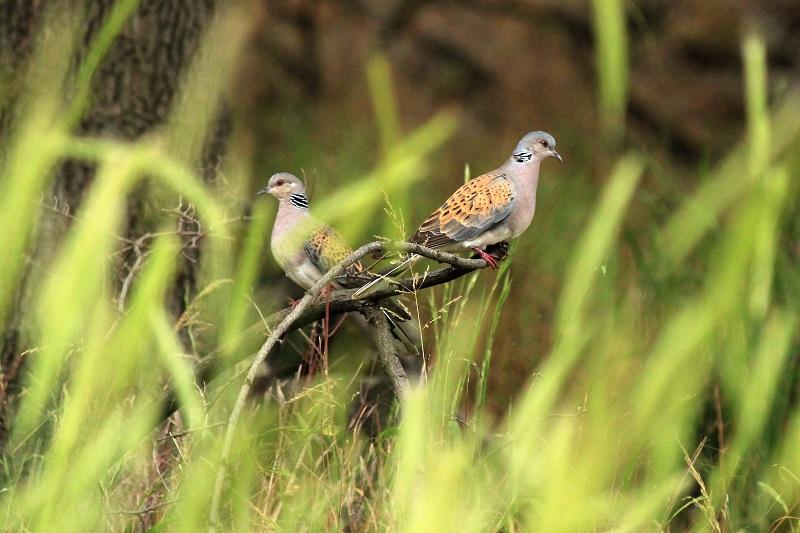 Птици наблюдение