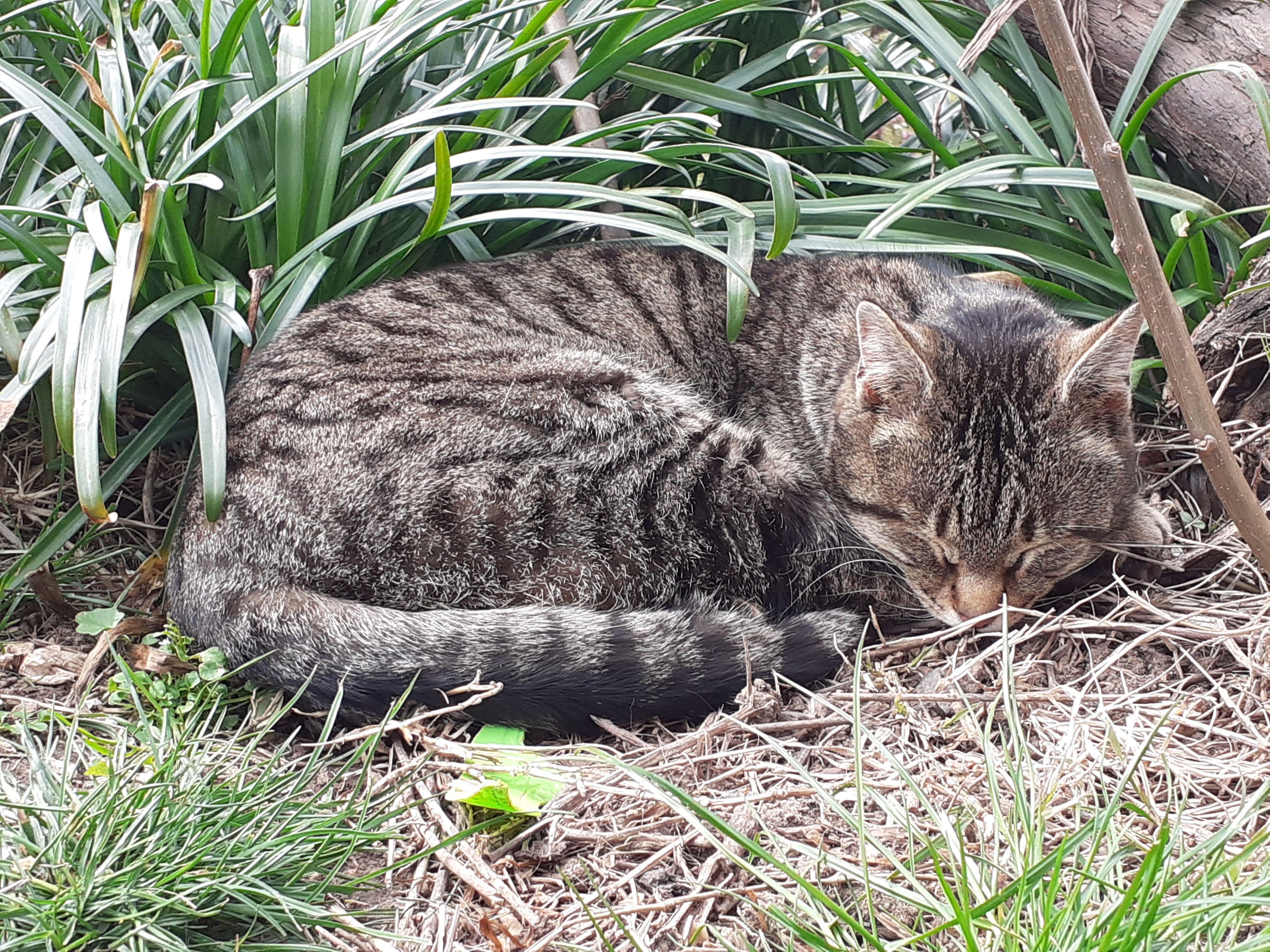 Котката Тара