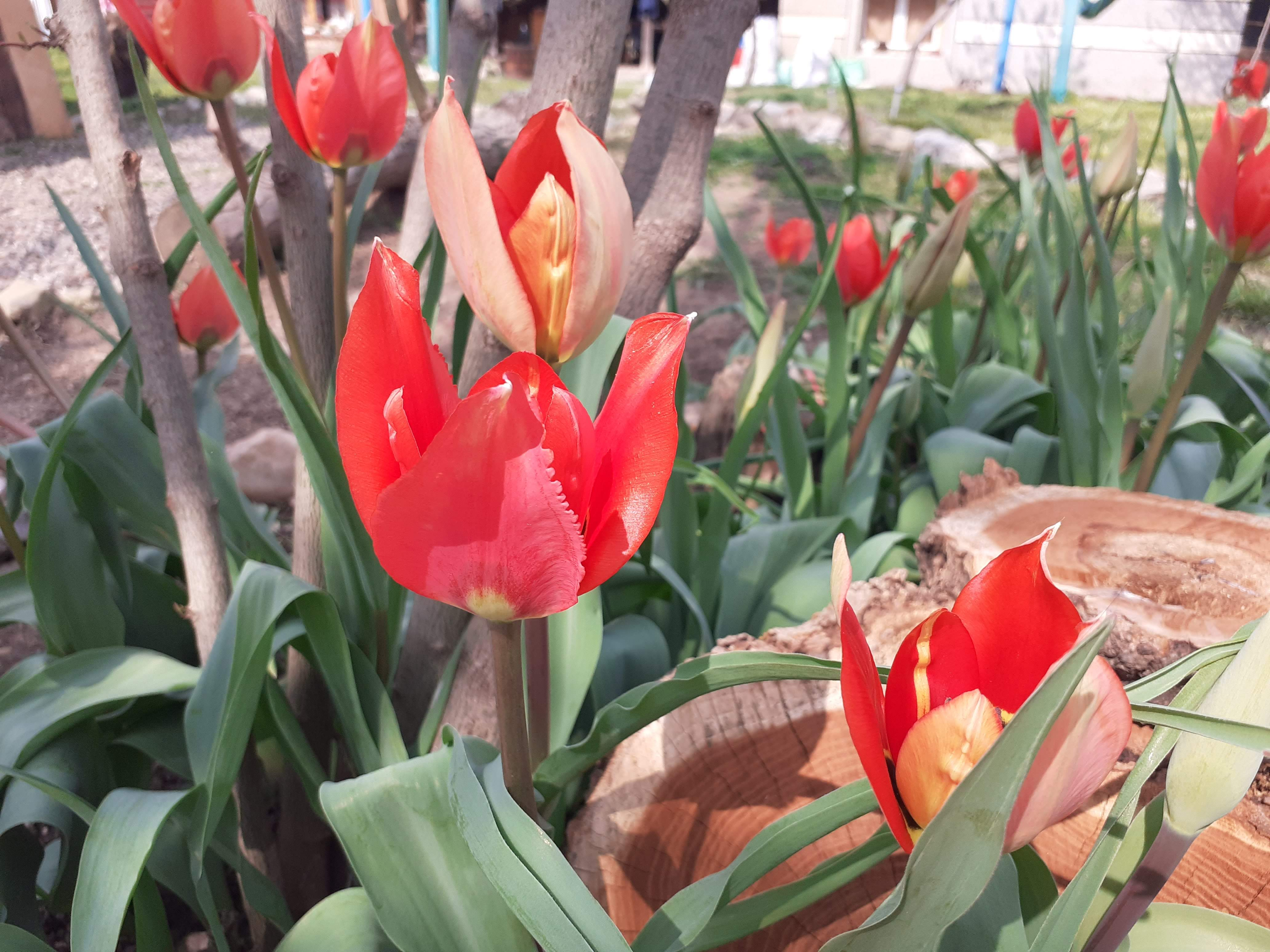 Пролет е