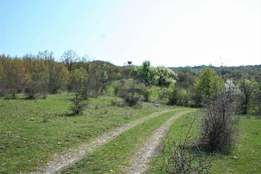 Пътят за Летовник
