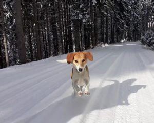 Зара се кефи на снега