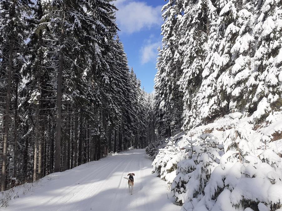 Зимен преход в района на Пампорово