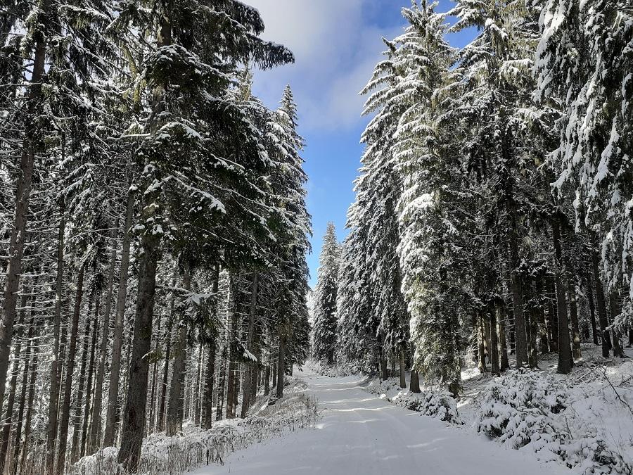 Хубавото на курорта Пампорово е, че има възможности не само за спускане със ски по пистите, но и за снежни разходки по маркирани маршрути