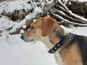Зара - кучето пътешественик