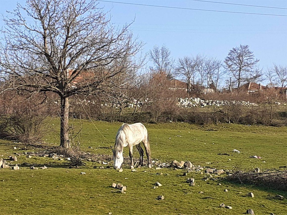 Конче в село Вишеград